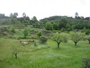 Das Grundstück